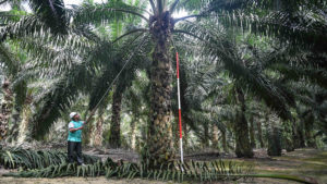 S$1.89 billion of palm oil at stake in Malaysia-India conflict