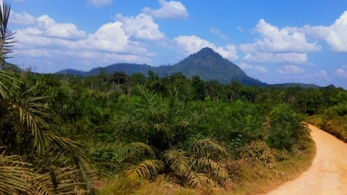 India's palm oil ban will spark price war with Indonesia